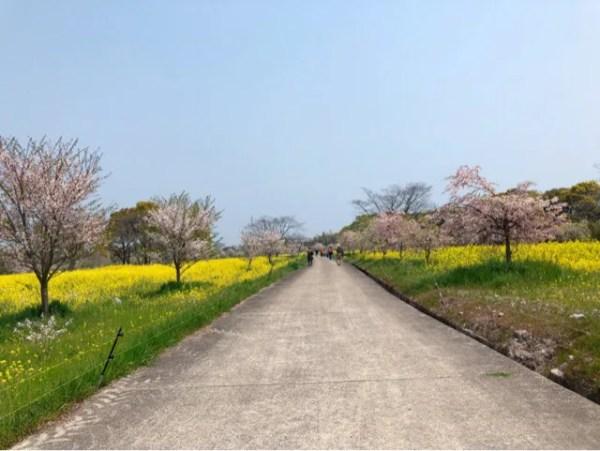 春の花まつりのしだれ桜