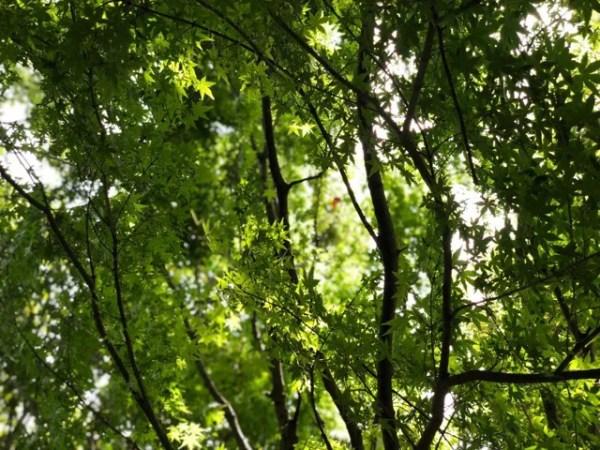 風の森というだけあって森の中をサーッと風が吹き抜ける!