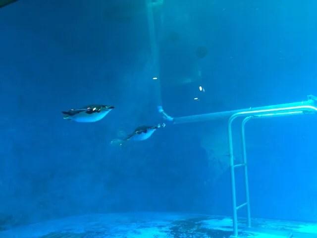 ペンギン水族館で泳ぐペンギン