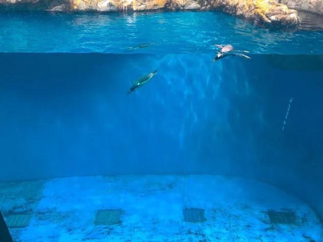 ペンギン水族館の2階と1階の水槽