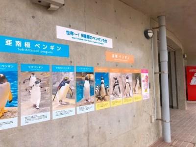 ペンギン水族館にいる9種類のペンギン