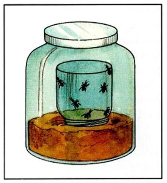 Ants in a small glass jar, placed upside down on the sand inside the larger jar, with cover on the larger jar.