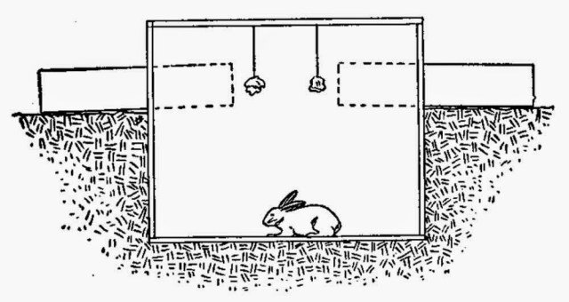 How to Make a Rabbit Trap