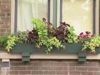 Planting Window Boxes for Shade | DIY