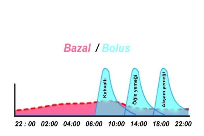 Bazal ve bolus insülin :