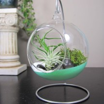 Diy Terrarium Ideas Add Green Decor