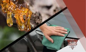 Remove Tree Sap From Your Ca