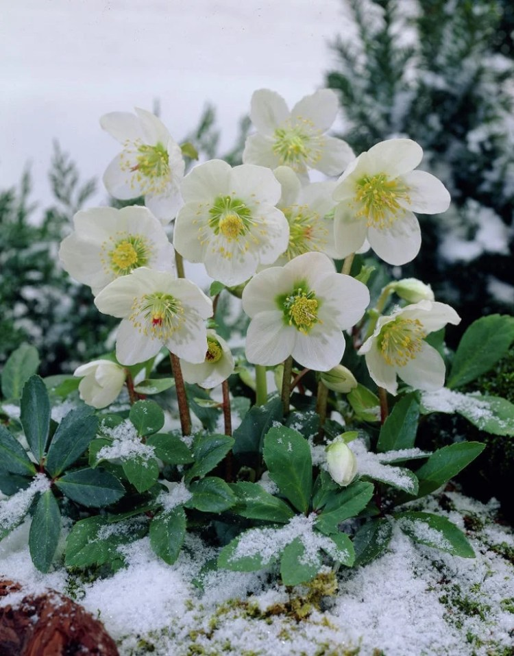 These 9 Winter Friendly Plants Will Keep Your Home Looking More Than Alive This Cold Season. Seriously, these plants are STUNNING!