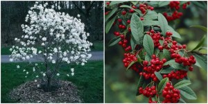 9 Beautiful Plants That Will Survive During Winter