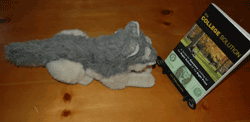 Stuffed animal reading College Solution Book