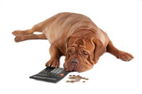 dog with calculator trying to figure most expensive colleges for high incomes
