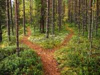 path spliting in woods representing baseball recruiting example
