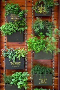 DIY Garden: Top Gardening Ideas for Small Balcony Garden ...