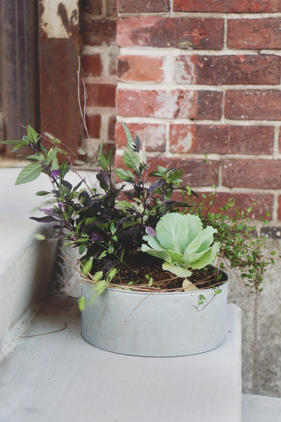 Fall Container Planting DIY With Terrain