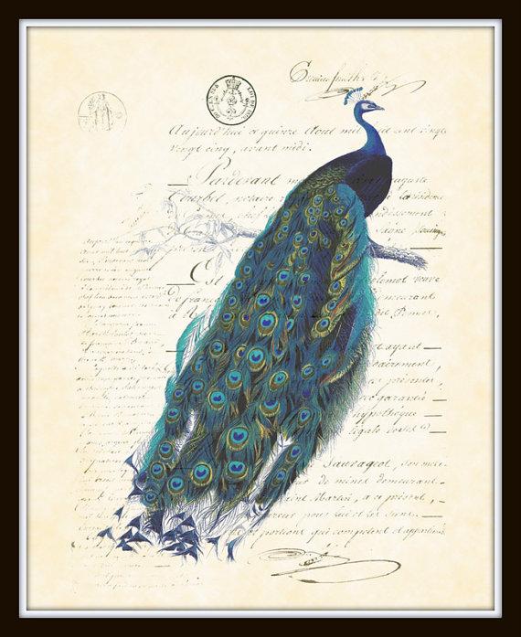 Antique French Peacock Plate 1 Art Print 8 x 10 Natural History Digital Collage Art Nouveau Art Deco by BelleBotanica