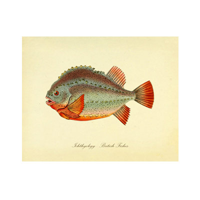 Vintage Fish Print Series 1 Plate 2 Digital Download: 8×10, specimen, fishes, vintage-look, printing and framing, decoupage by RhineandStone