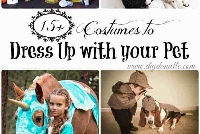 15+ Halloween Costumes to Dress up with Your Pet