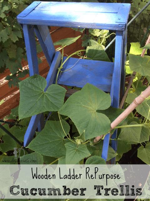 Ladder repurpose to cucumber trellis.