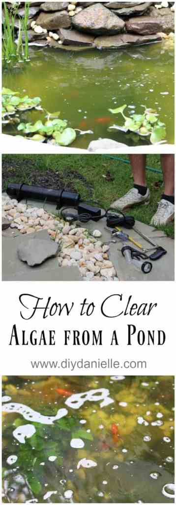How to clear algae from a pond with a UV light..