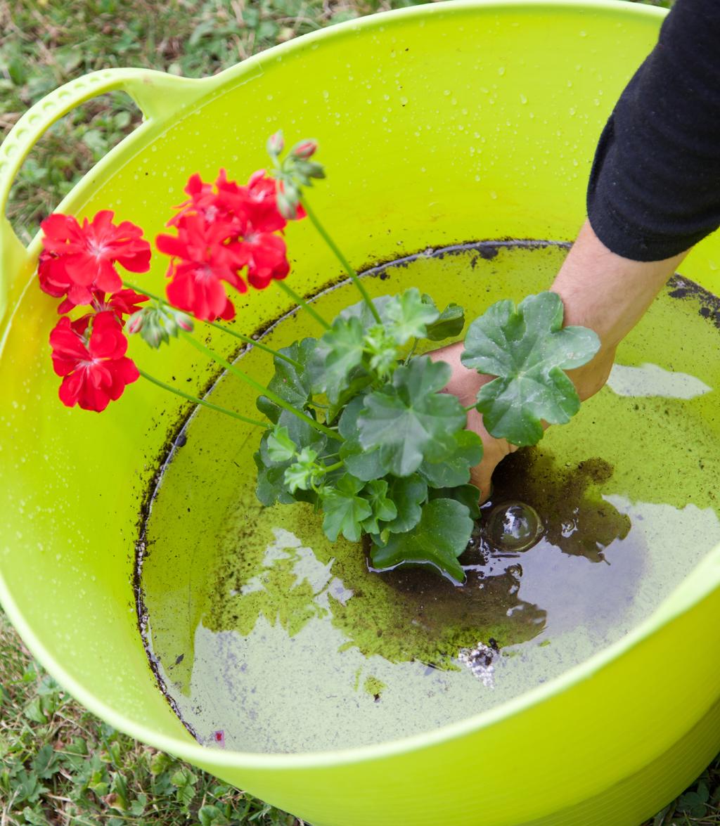 Vasque Jardin Fleurie