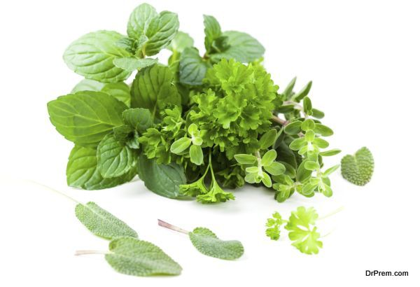 Variation of herbs from garden