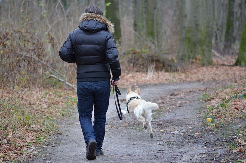 Dog Makes You Healthier