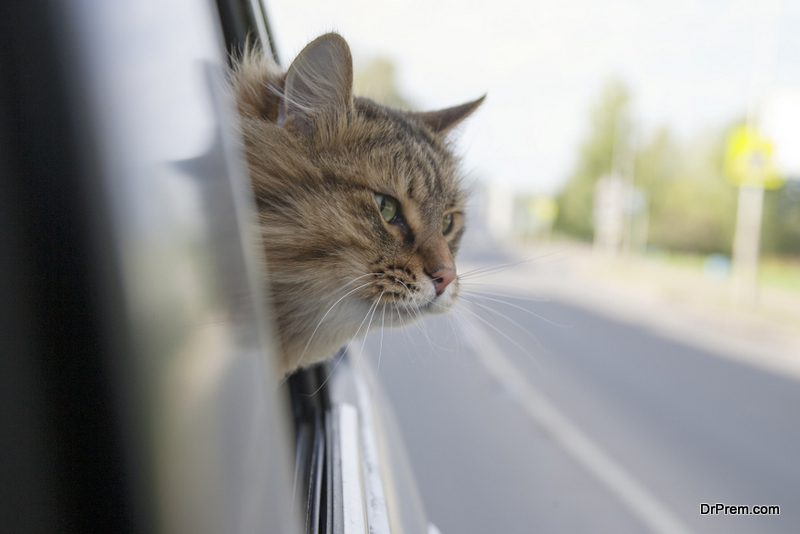 Travelling-By-Car-with-A-Cat