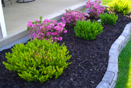 top plants landscaping
