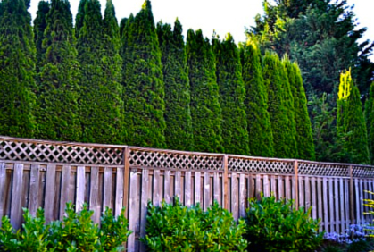 Best Privacy Trees Hedges & Shrubs with Landscaping Ide