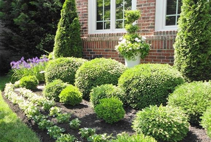 shrubs and bushes landscaping