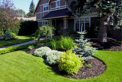 top 2018 evergreen trees with diy
