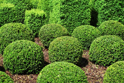 shrubs & bushes landscaping