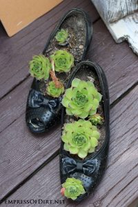 Succulent-Shoes container garden