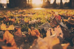 forest-meadow-leaves-autumn 5 essential jobs