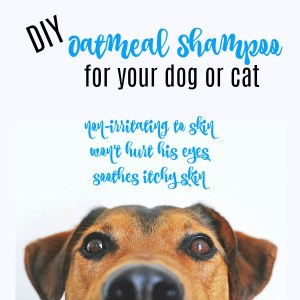 oatmeal shampoo dog cat