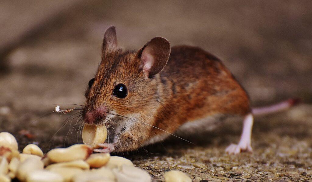 animal blur close up cute