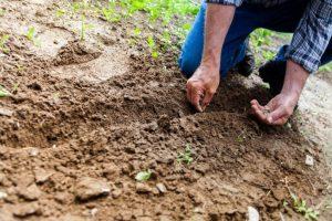 man planting plant on soil