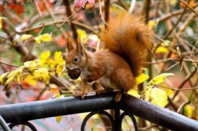 squirrel infestation
