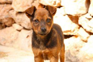adorable animal canine cute