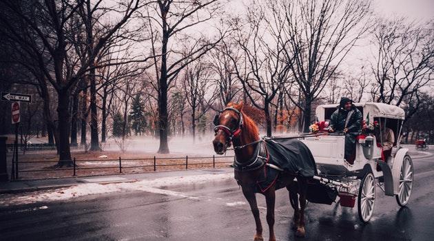 new york city central park