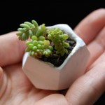 Diy Tiny Polymer Clay Plant Pots