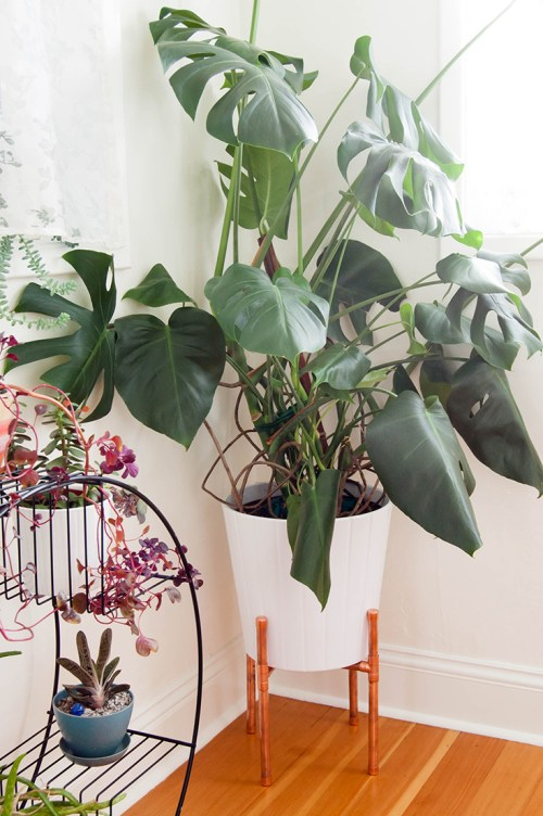 Learn how to make this DIY copper plant stand