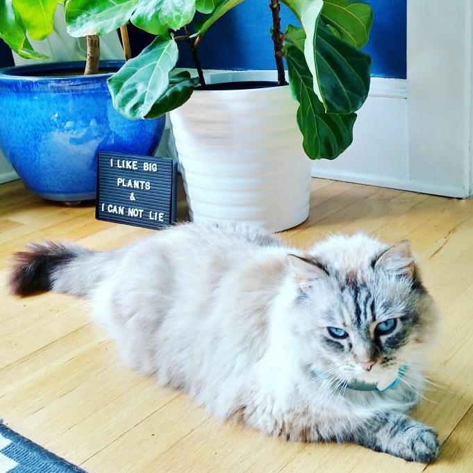 Cats + Big Plants