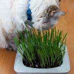 Cat Grass DIY Concrete Planter