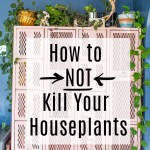 How to Not Kill Your Houseplants