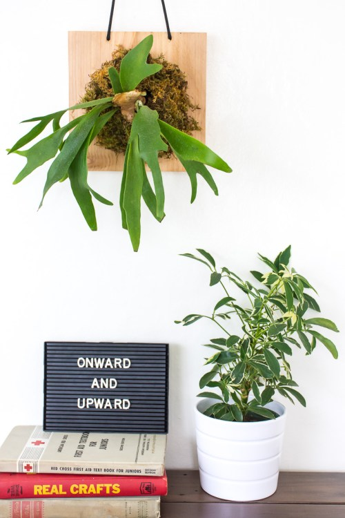 Make your own vertical garden by mounting and hanging a staghorn fern