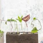 Make a Test Tube Vase Plant Propagation Station