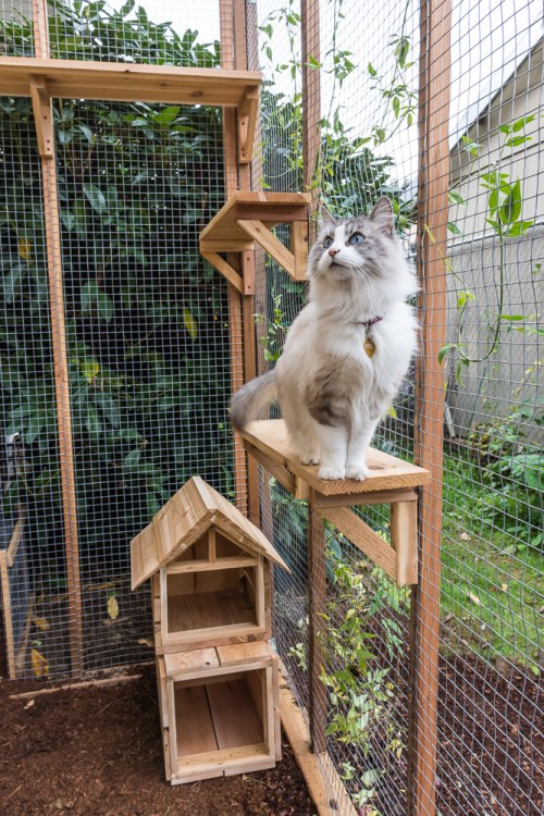 Want to let your cats outoors, but keep them protected? Check out these tips and advice for building a catio.