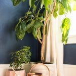 5 Ways to Tell If Your Houseplants Need Water