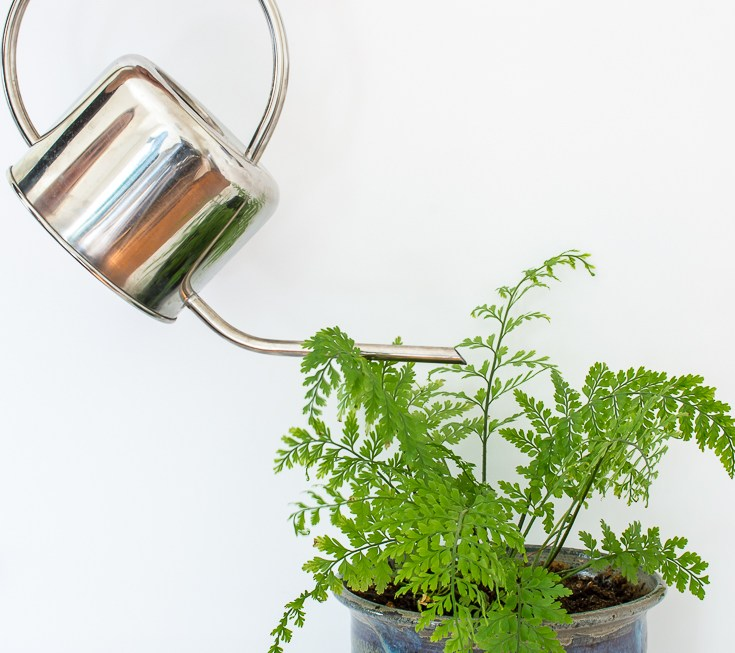 Not sure when to water your plants? Here are 5 ways to tell whether it's time to get out the watering can. #plants #houseplants